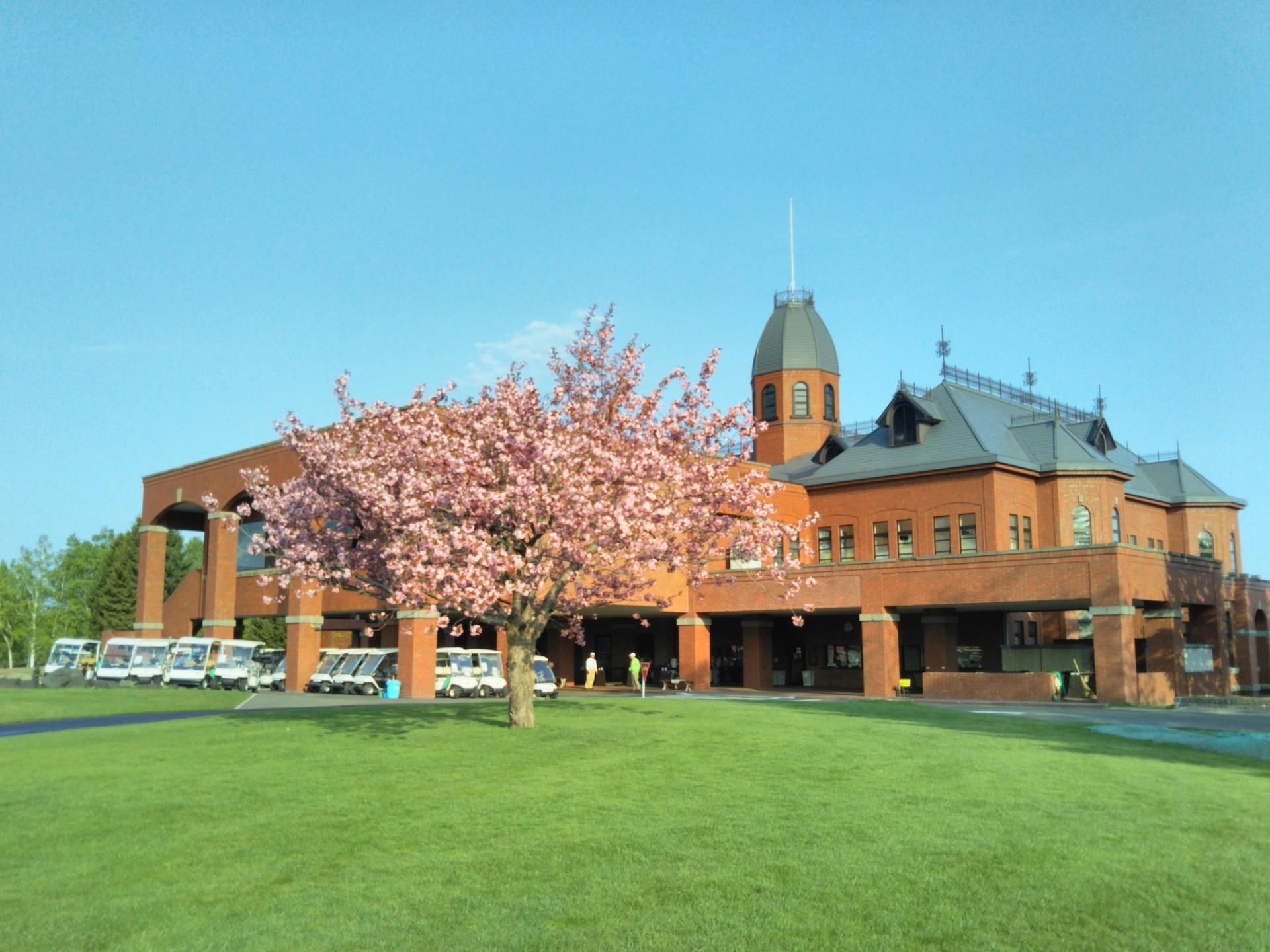 季節はずれの桜満開!